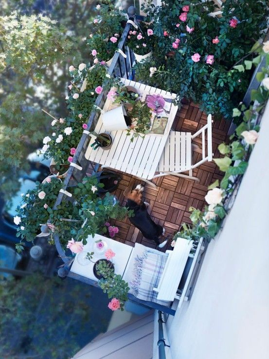 balcony white decoration with beagle