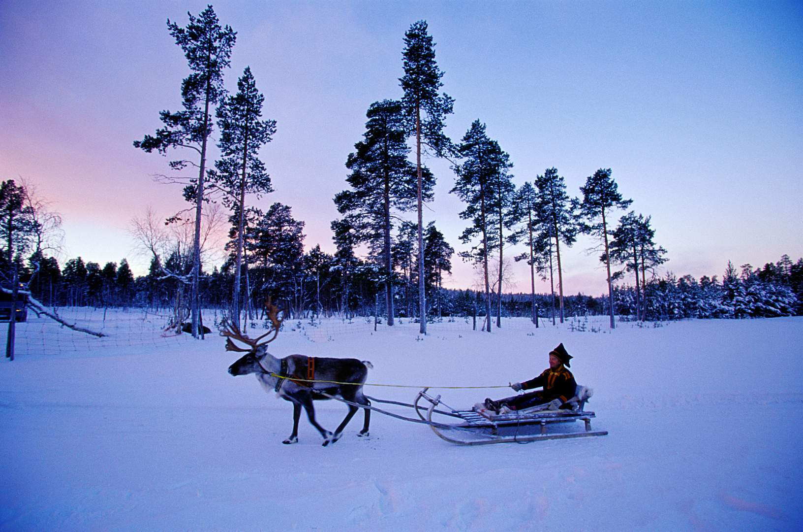 Finland sled with rain deer winter time