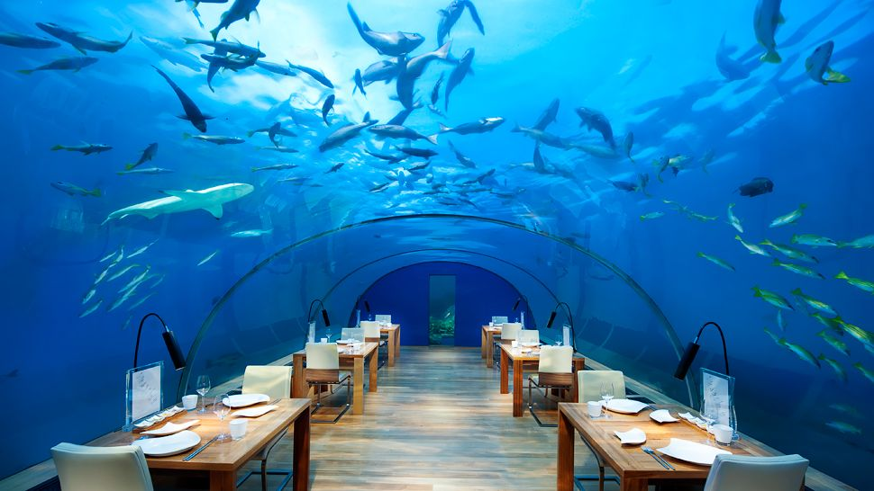 Hotel Conrad Rangali, Maldives restaurant and sea world