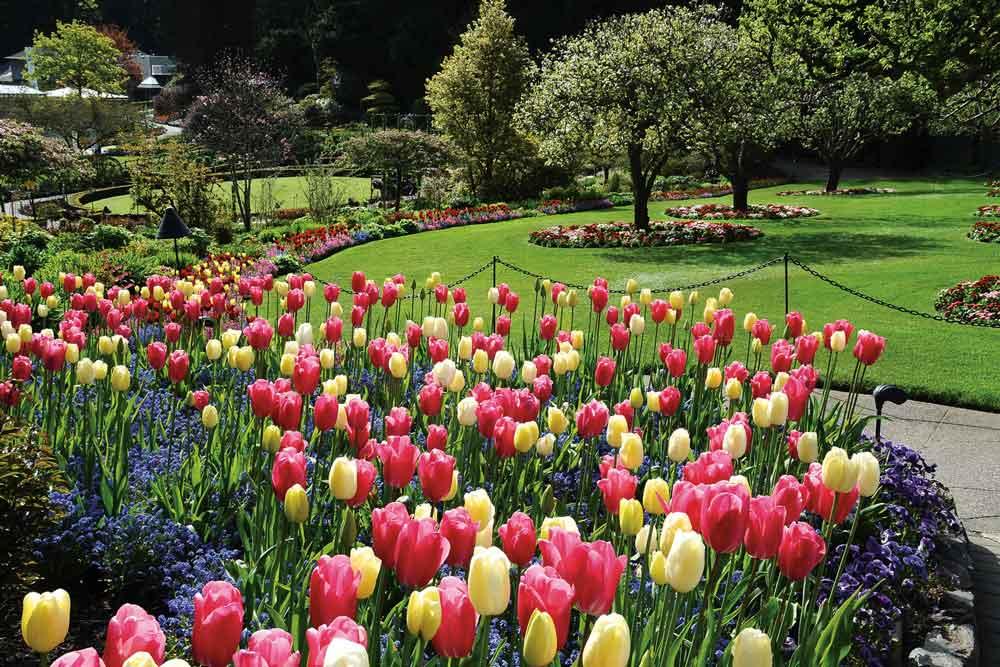 Butchart-Gardens,-Canada-2