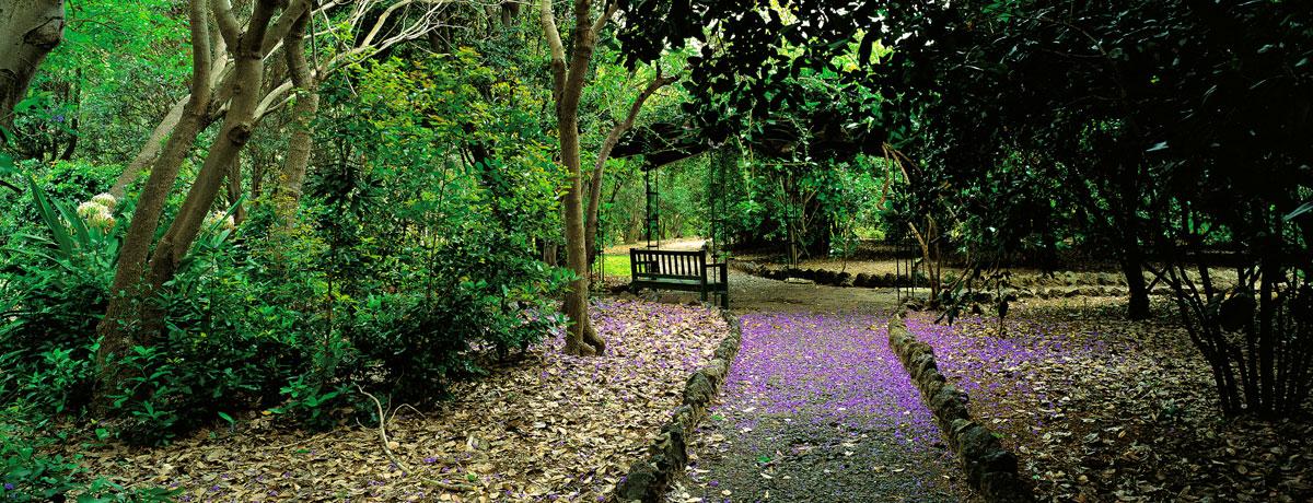 The Canario Garden (Jardin Canario), Canary Islands 2