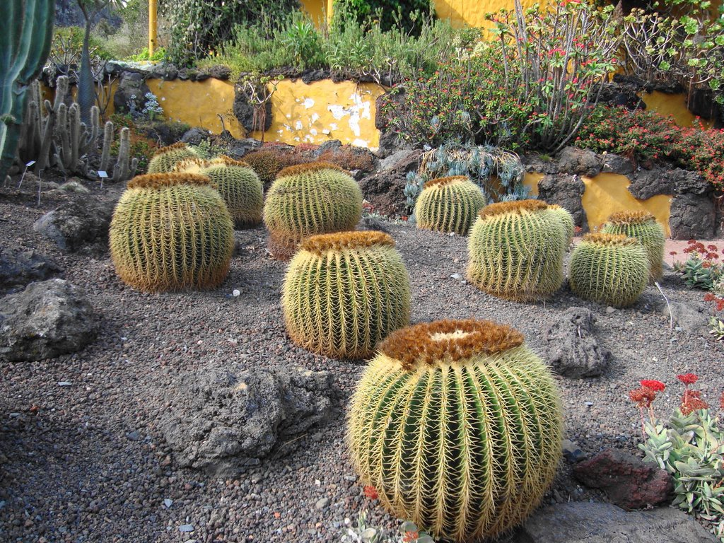The Canario Garden (Jardin Canario), Canary Islands 3
