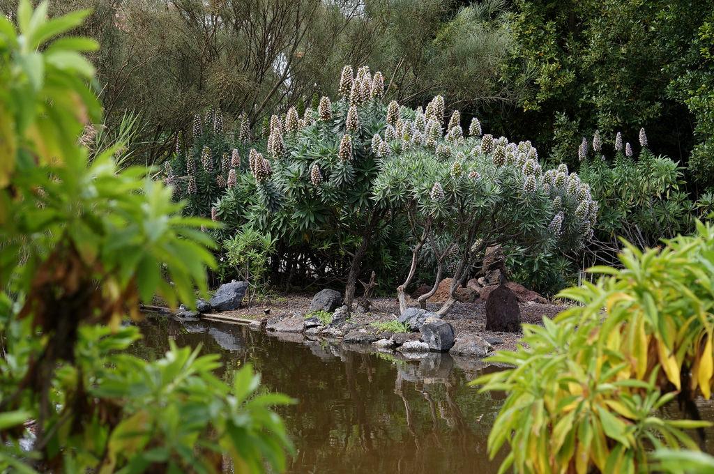 The Canario Garden (Jardin Canario), Canary Islands