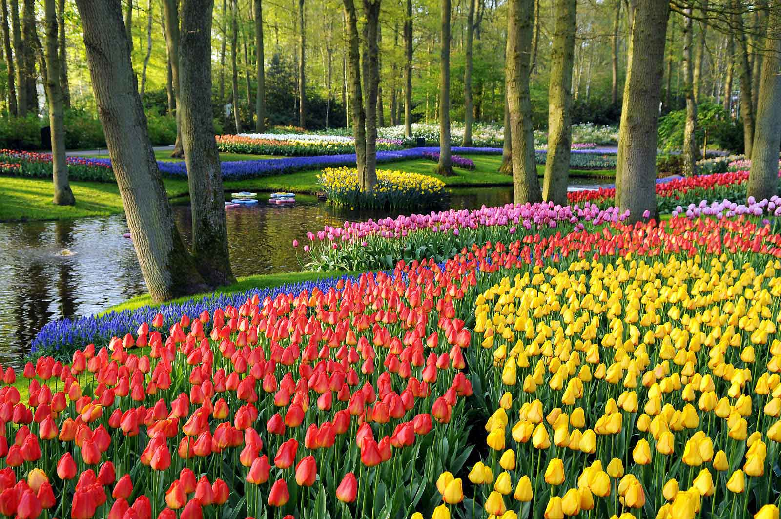 The-Garden-Keukenhof,-Netherlands-2