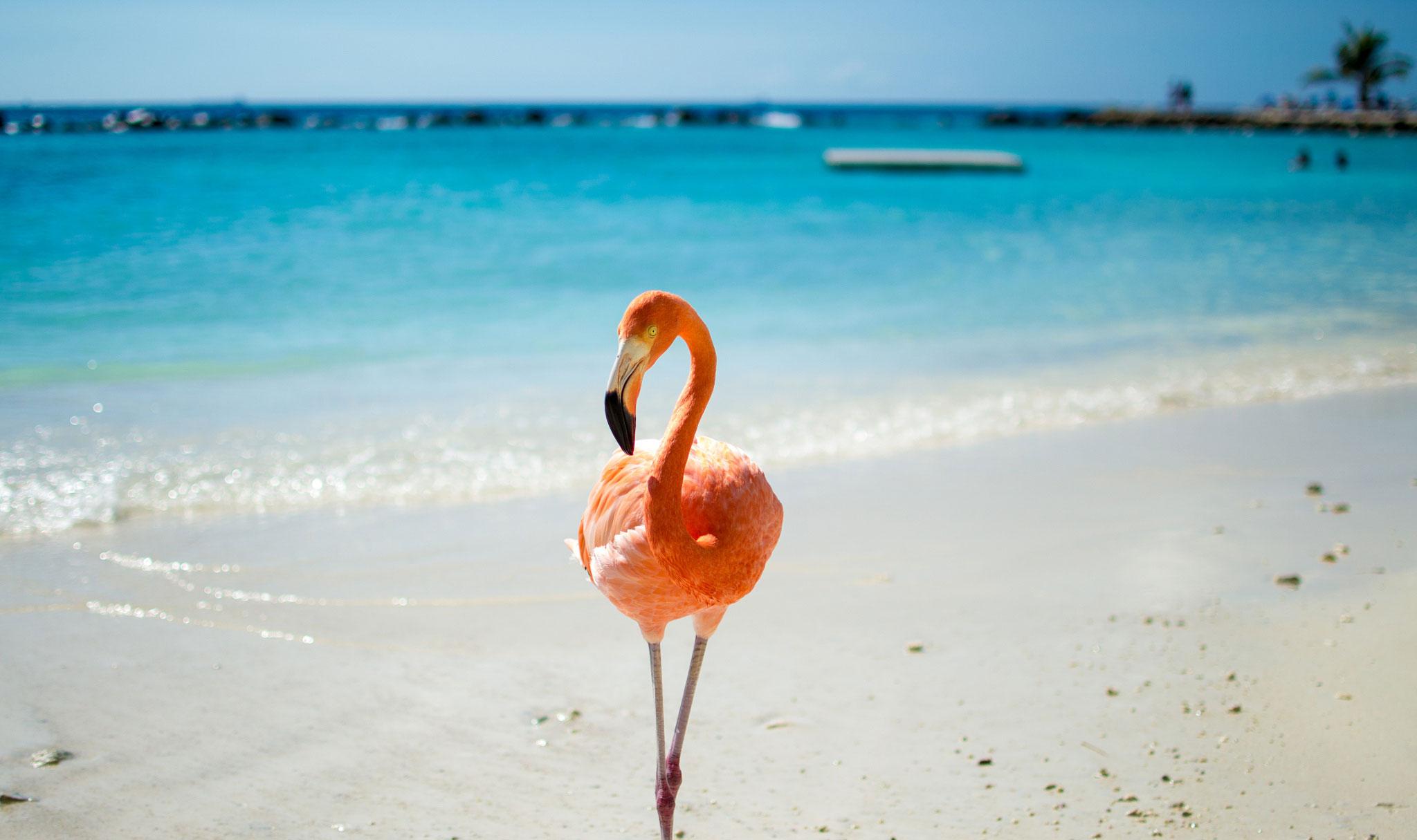 pink-flamingo-on-the-beach Surprisingly Ancient Species vol.1
