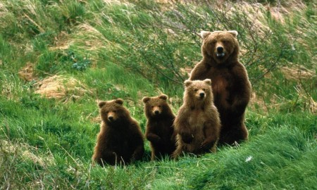 Abruzzo National Park bears