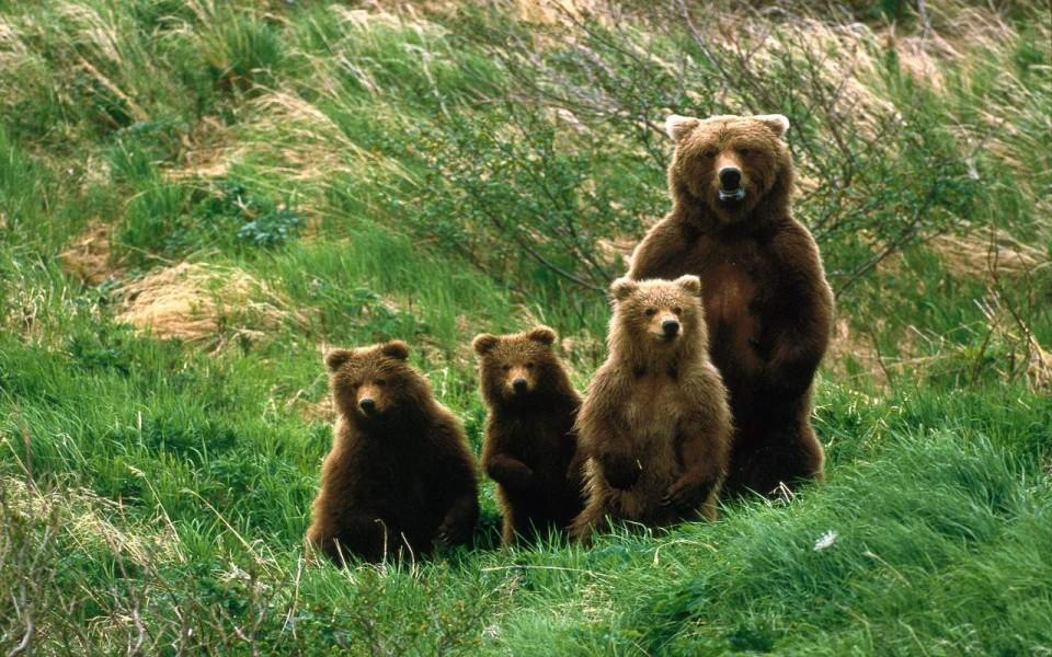 Abruzzo National Park bears