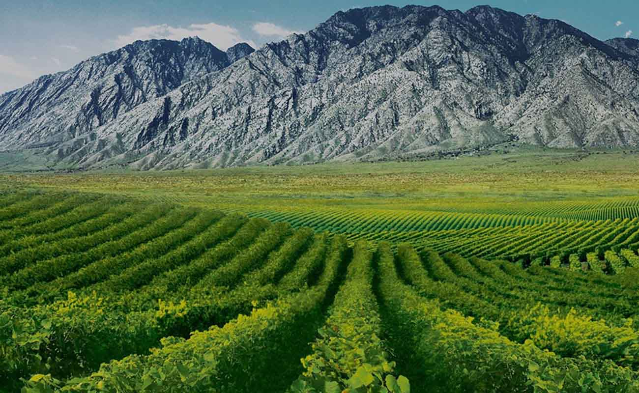 Ningxia, China wine yards