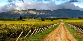 10 Emerging Wine Regions To Visit
