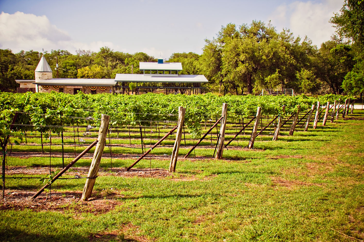 Texas Hill Country, United States vineyard