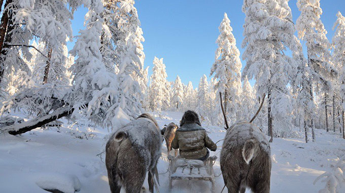Oymyakon, Russia, a man with two deers