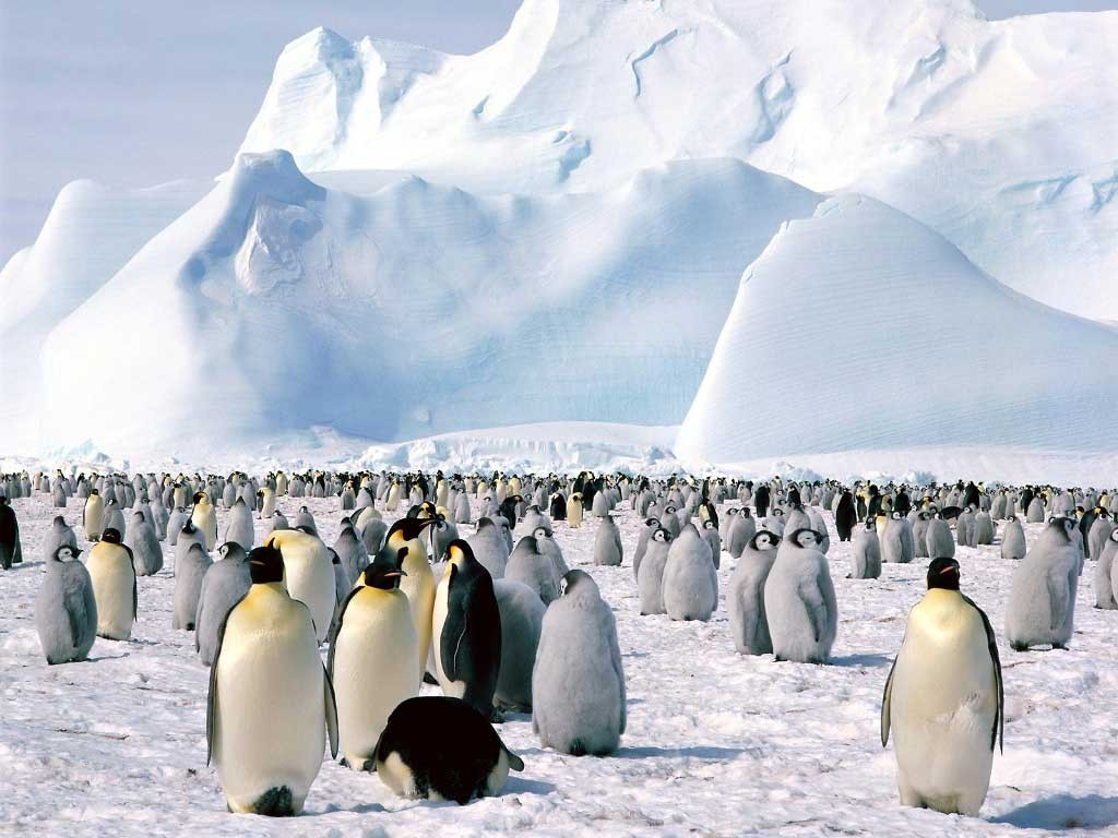 antarctica-penguin-birds