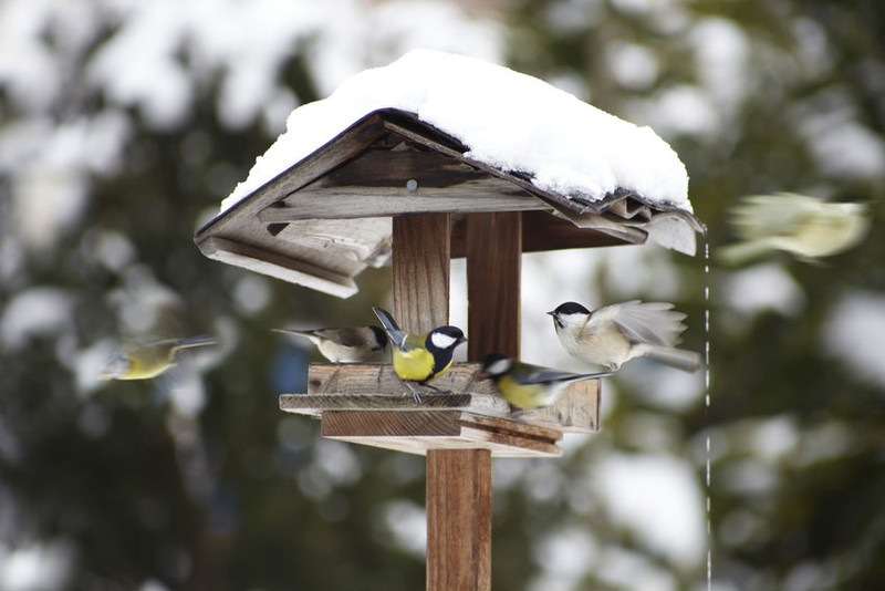 bird feeding-in-winter-birdhouse