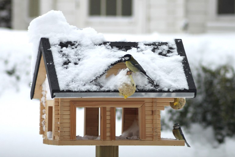 bird-feeding-in-garden-birdhouse