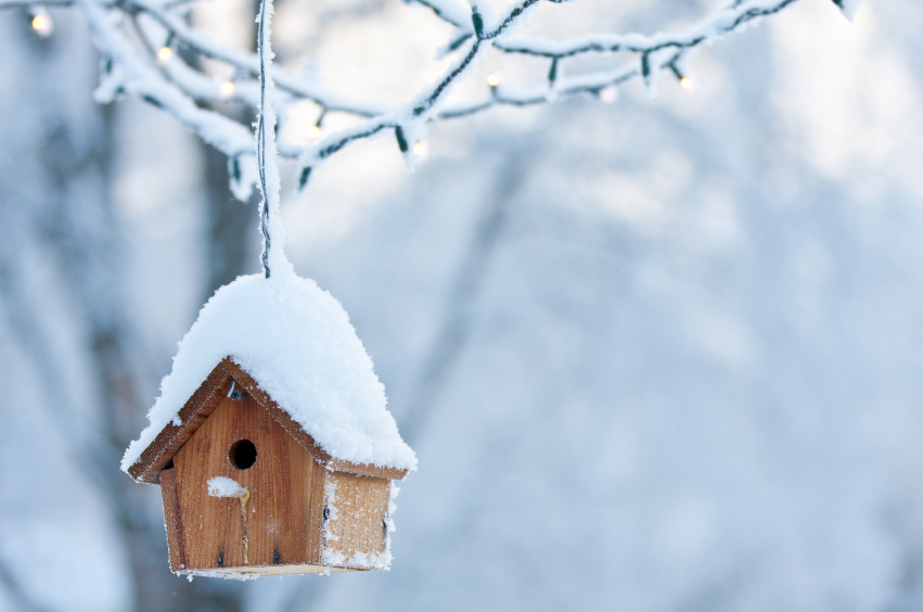 Snow covered bird house hanging