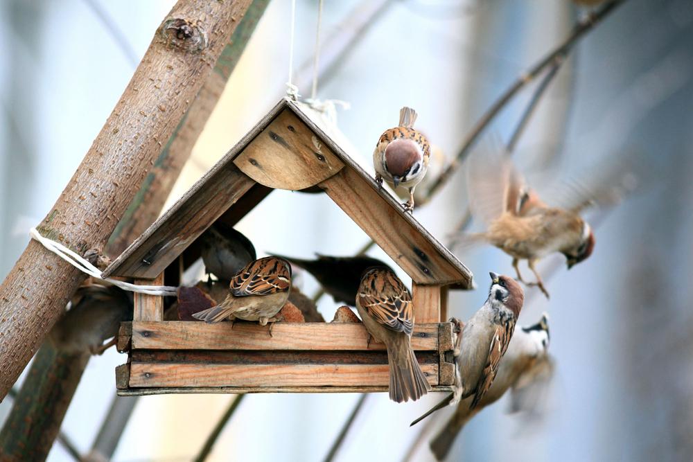 food-protection-bird-feed-bird-houses