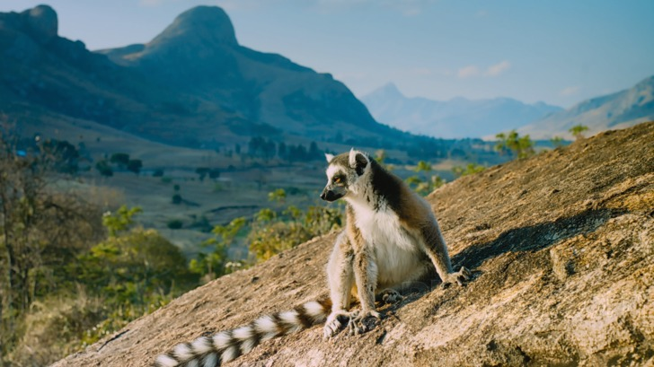 madagascar-island-animals-island-of-lemurs