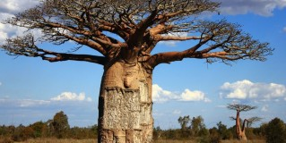 8 Amazing Facts About Madagascar