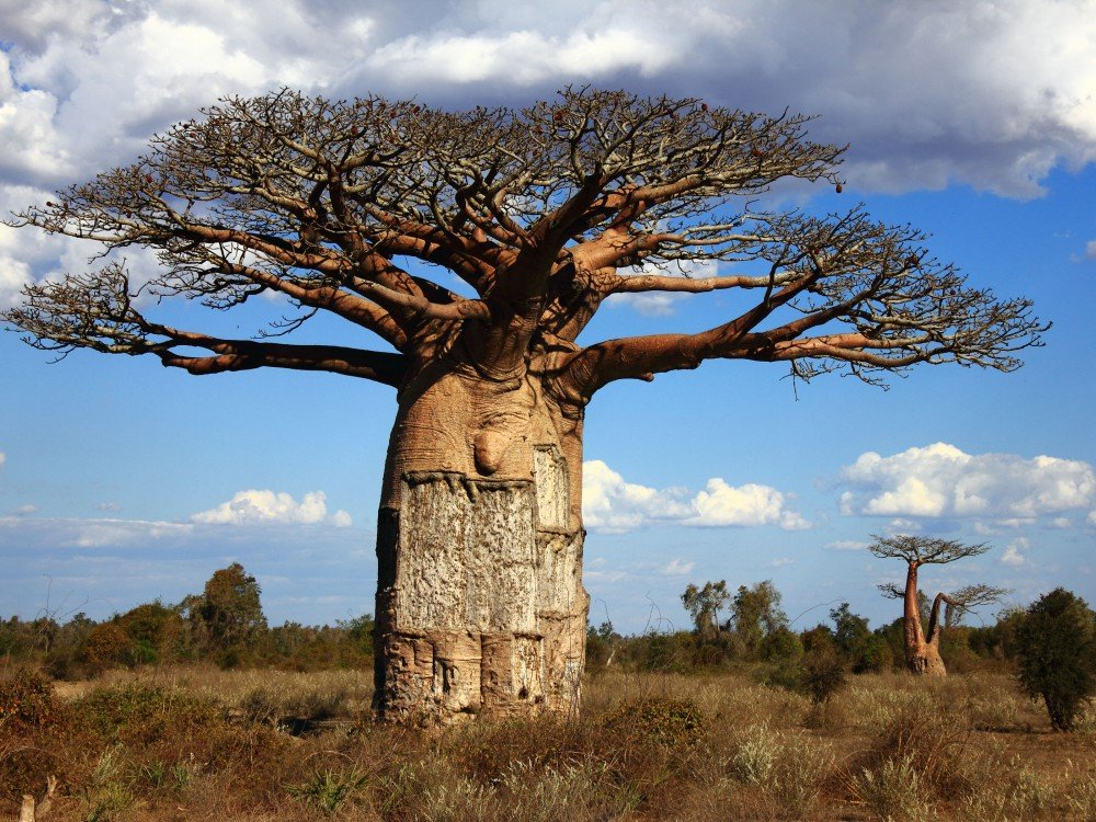 madagascar-island-nature-baobab-tree