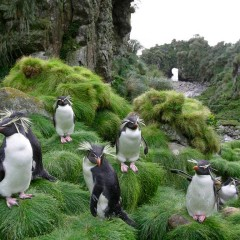 Where You Can See Penguins
