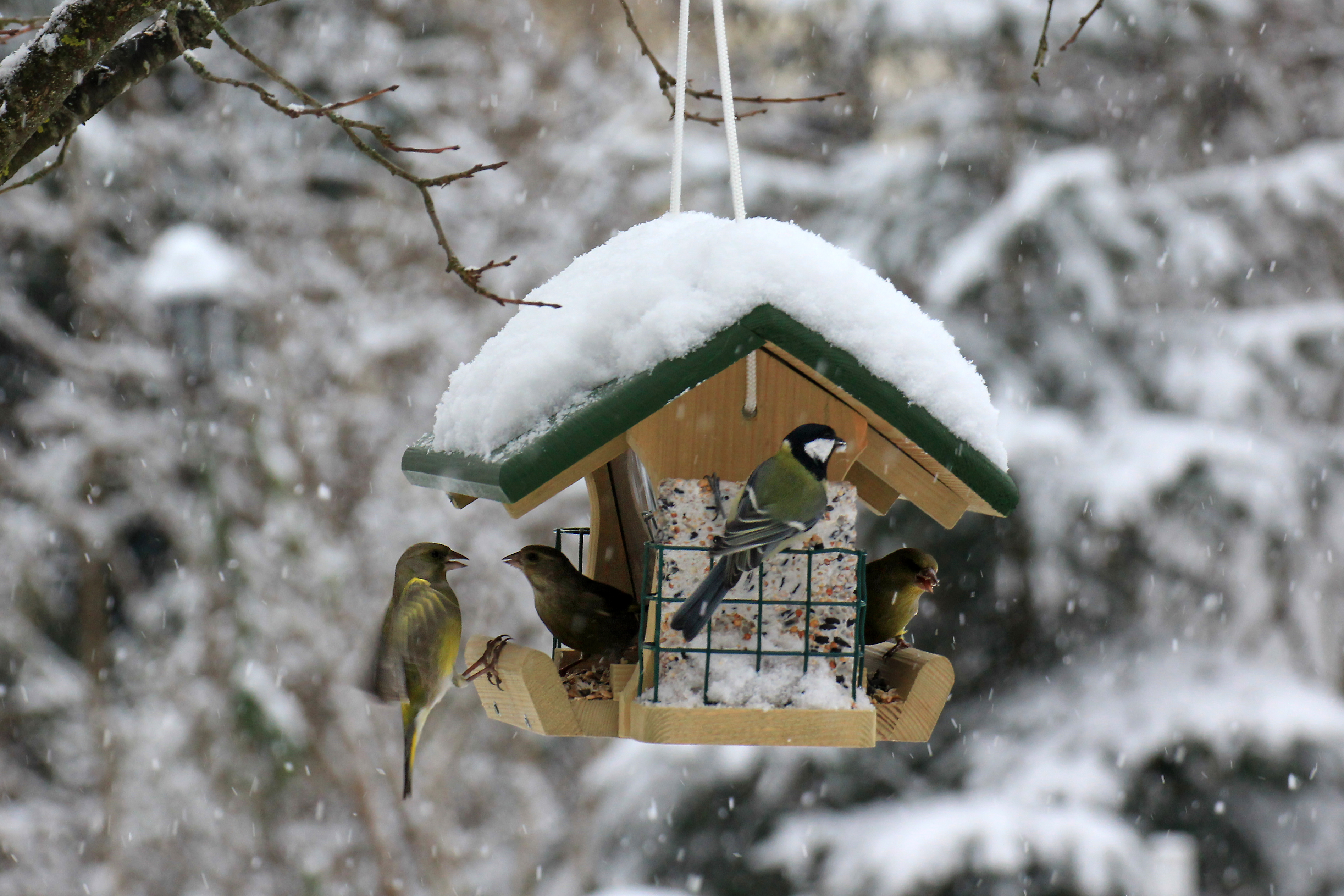 protection-and-food-in-the-winter-bird-house