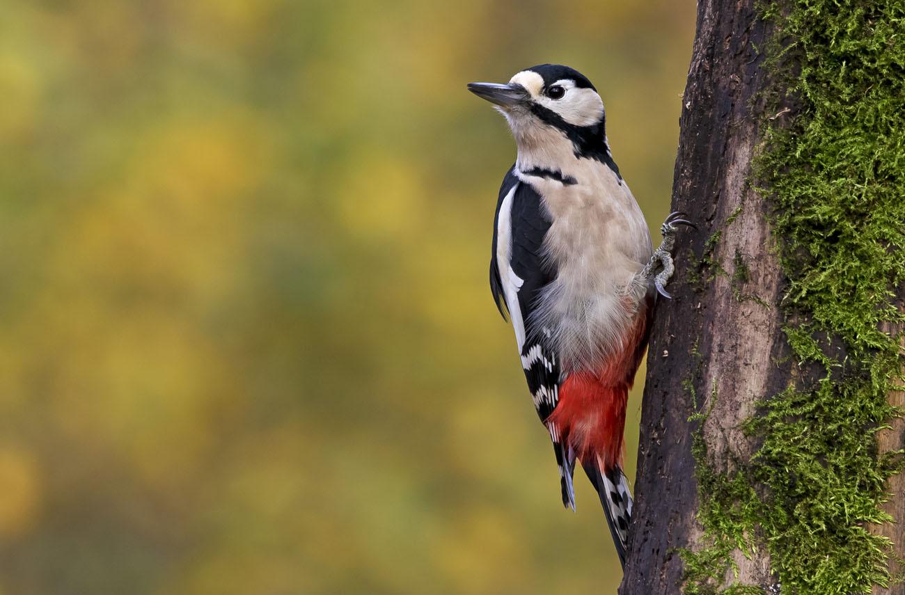 the-buntspecht-in-the-forest-bird-feeding bird feeder,bird feeders,feeding birds,types of bird feeders,how to