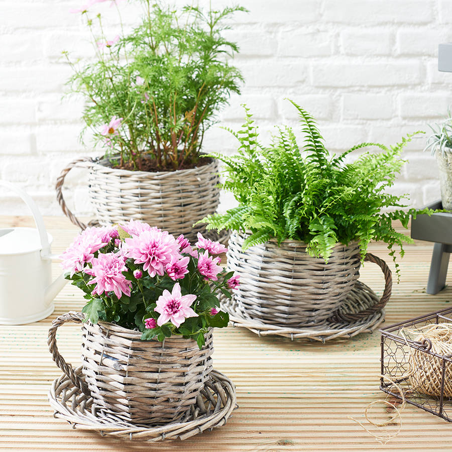 basket-tea-cup-flower-planter