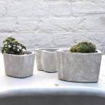 Plants Pot Indoor And Outdoor