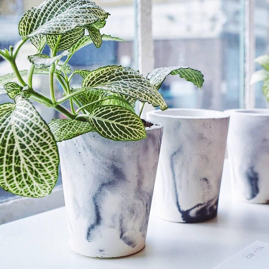 Plants Pot Indoor And Outdoor