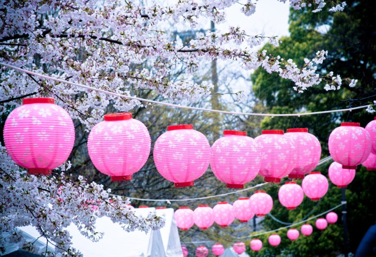 Beautiful effect with lanterns in pink and spring flowers decorating with paper lanterns