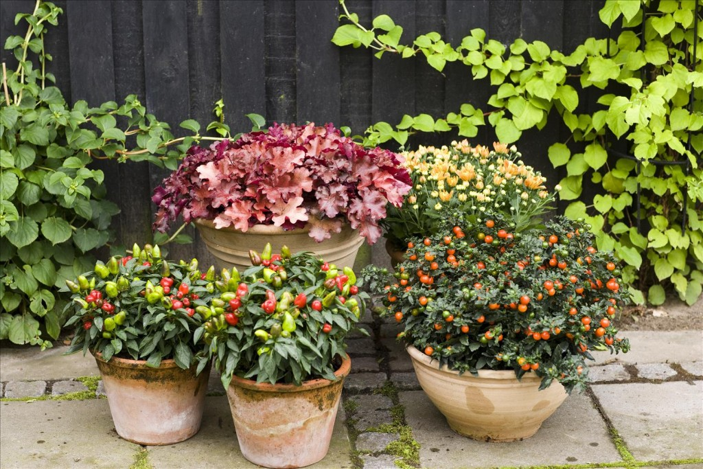Garden decoration with potted patio plants
