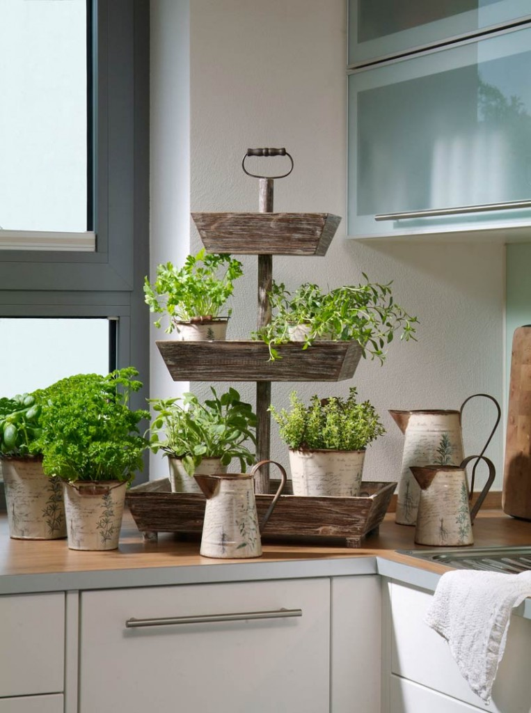 Herbs in the kitchen take potted plants