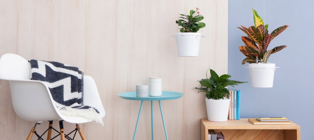 In the modern house potted houseplants