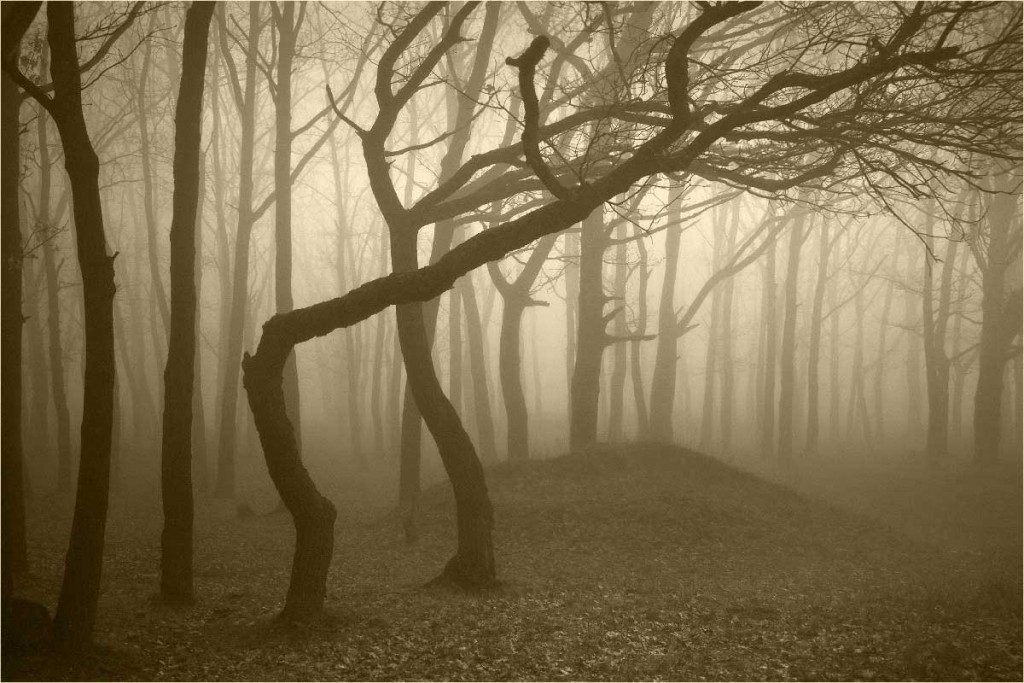 Haunted-forest-Hoia-Baciu-Transylvania-Romania-by-night