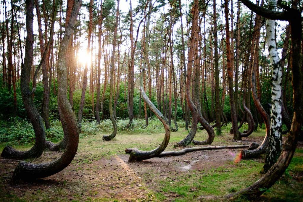 Hoia-Baciu---The-Mysterious-Forest-Interesting-Trees-Ghosts-Legends