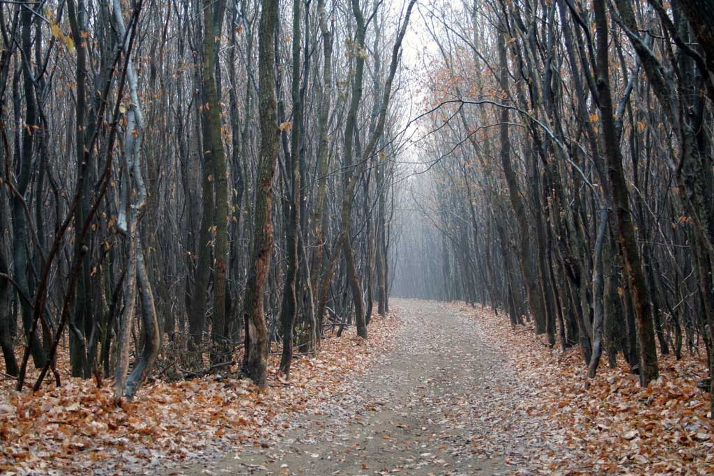 Hoia-Baciu---The-Mysterious-Forest-fall-trees-path-ghosts-haunted