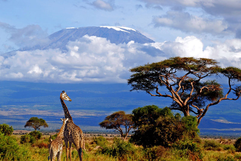 Mt-Kilimanjaro-natural-wonders-volcano-giraffes 10 Of The Most Incredible Volcanoes