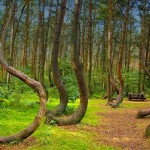 Hoia Baciu – The Mysterious Forest