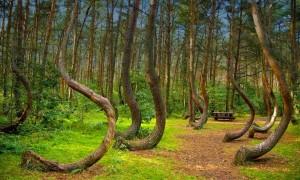 forest Romania Hoia Baciu hoia-forest-the-5-freakiest-places-on-earth Transylvania Bermuda Triangle