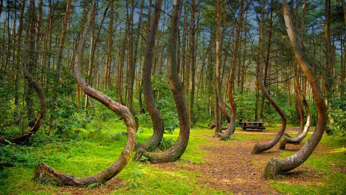 forest Romania Hoia Baciu hoia-forest-the-5-freakiest-places-on-earth Transylvania Bermuda Triangle