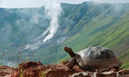 A-Galаpagos-giant-tortoise-(Chelonoidis-nigra-vandenburghi)