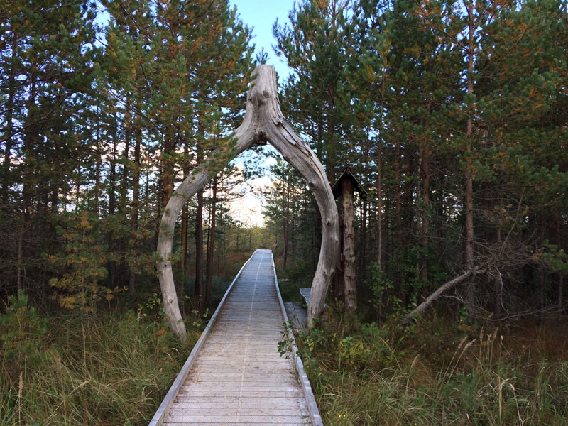 Soomaa-National-Park-Estonia-beautiful-nature