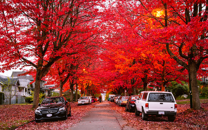 Canada,-Vancouver-beautiful-red-fall-trees-on-the-road-top-autumn-tourist-destinations