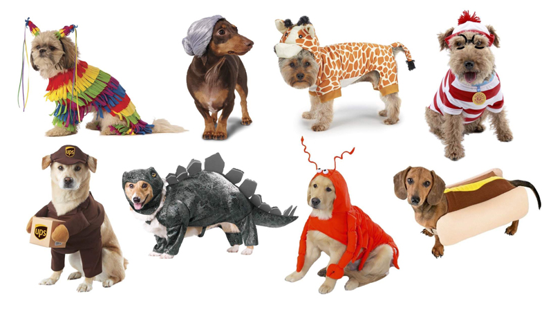 Dogs-Halloween-Funny-Costumes-Different-Kind-of-dogs-Halloween-costume-ideas-y-Halloween-costumes-Halloween-ideas