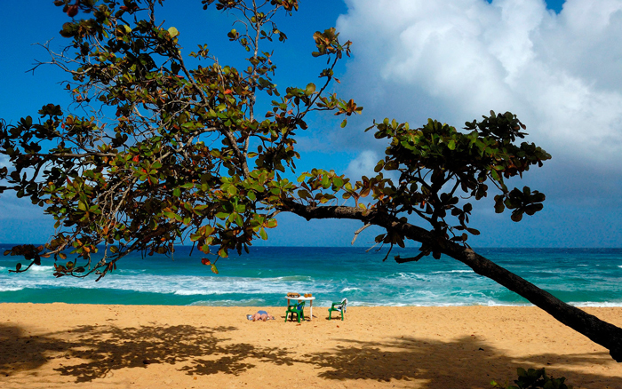 Dominican-Republic-Man-On-The-Beach-Under-a-Tree-beach-vacation-spots-best-tropical-vacation-spots--tropical-holiday-destinations