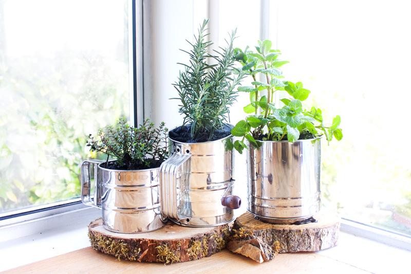 Indoor Herbs Garden Ideas Pre Tend Be Curious