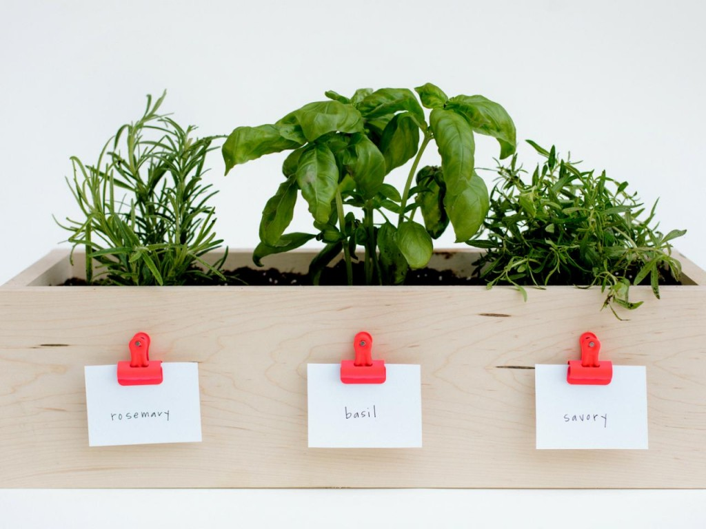 Herbs Ideas growing herbs indoors herb garden window herb garden kitchen herb garden growing herbs herb planter indoor