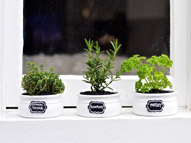 Herbs In Home Rosemary Parsley Lemon Thyme Growing . Herbs Ideas Growing  Herbs Indoors ...