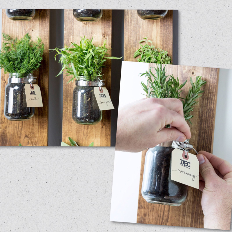 Jars-with-herbs-home-growing-growing-herbs-indoors-herb-garden-window-herb-garden-kitchen-herb-garden-growing-herbs-herb-planter-indoor