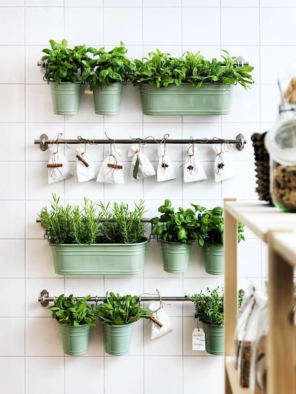 Kitchen Herb Real Garden Easy Cooking growing herbs indoors herb garden window herb garden kitchen herb garden growing herbs herb planter indoor